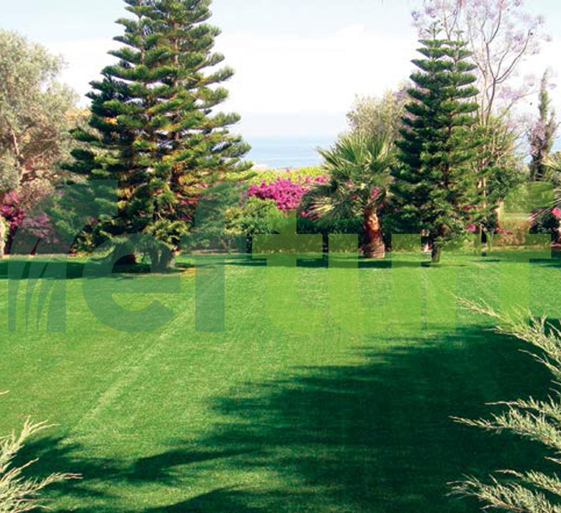 suni çim bakımı, yeşillik, doğa, doğa fotoğrafı, ağaç,